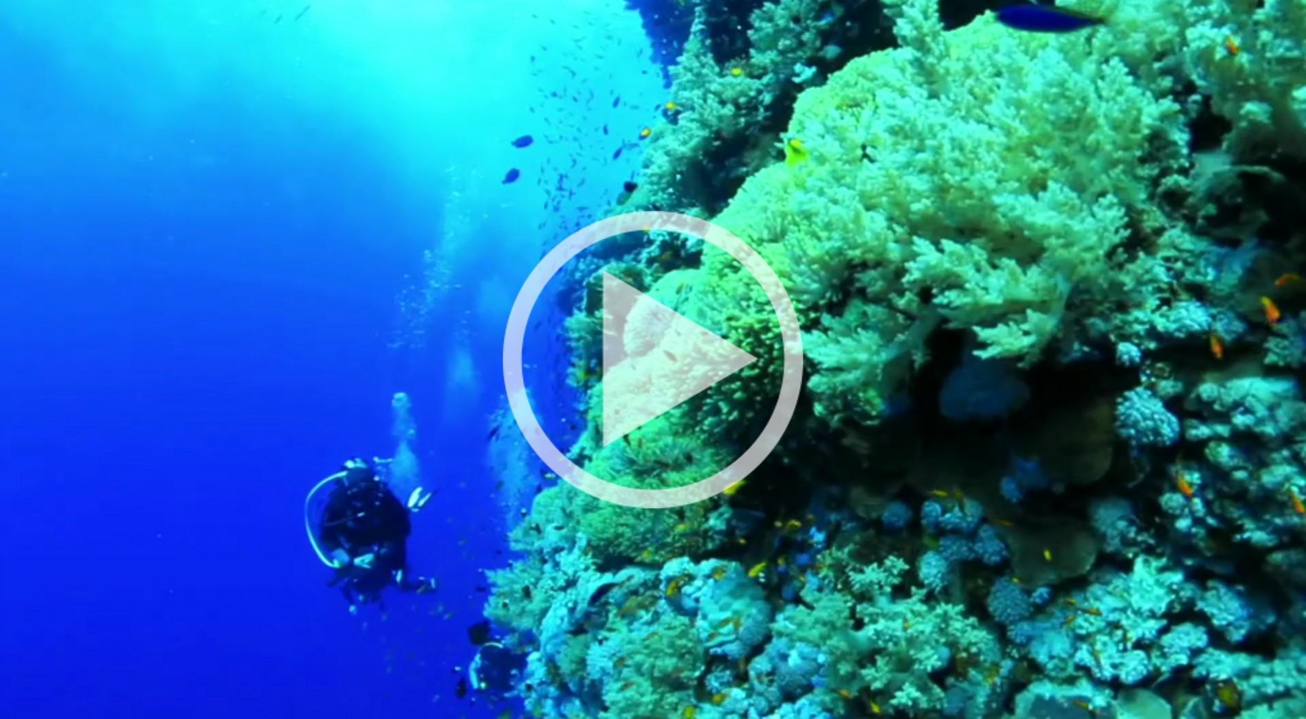 Beskid Divers